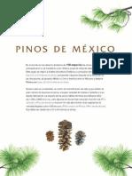 Pinos de México