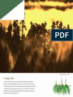 Incendio en los pinos