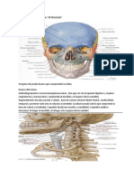 Anatomía de cabeza y cuello clase osteología.docx.docx