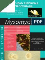 Myxomycotas.pptx