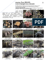 1196_brazil_fungi_of_parque_da_cidade.pdf