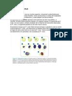 Plasmodium ovale-08 -08