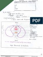 anatomie Pr Hammoudi cardio