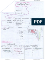 2. Appareil Respiratoire (2) (Pr HAMMOUDI)