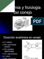 anatomia y fisioliogia del conejo (2)