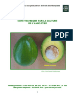 avocatier-nt-culture-marquises_ciradYvesBertin_nd