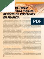 20-22-empleo-de-trigo-entero-para-pollos-beneficios-positivos-en-francia-SA201803
