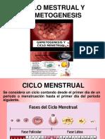 CICLO MESTRUAL Y GAMETOGENESIS_1.ppt