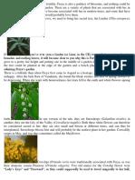 Planting A Freya Garden
