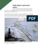 30 de curiozități despre urșii polari, giganții Nordului