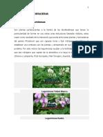 LEGUMINOSAS FORRAJERAS.docx