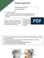 Sistema genital embrio.pptx