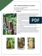 Fusarium wilt of banana