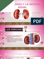 riñones