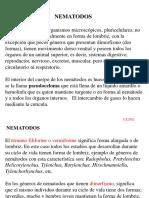 2. MORFOLOGÍA (estructura externa e interna).pptx