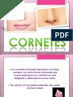 cornetes nasalesinferiores