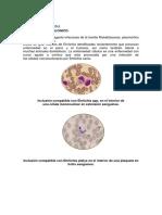 ERLIQUIOSIS CANINA (1)