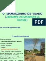 Cópia de Mamaozinho -100628180400-phpapp01