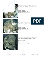 Manual Petrología Ígnea JPHB