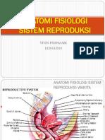 anatomy reproductive tract