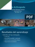 Artropodos Hexapoda ESPE