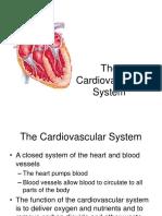 - Cardiovascular System
