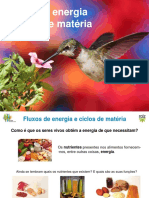 expl8_fluxos_energia.pptx