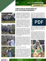 Mujeres_impulsan_plantaciones_de_pinabete_con_fines_navideños__Sololá