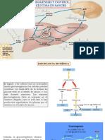 19. GLUCONEOGENESIS Y CONTROL DE LA GLUCOSA EN SANGRE - copia (1)