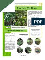 Diciembre-Epífitas.pdf