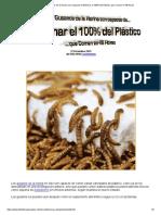 Los Gusanos de la Harina son capaces de Eliminar el 100% del Plástico que Comen en 48 Horas