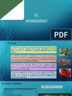 monografia arandanooo.pptx