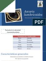 Ascaris lumbricoides21