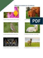 NOMBRE DE LOS SONIDOS DE LOS ANIMALES