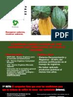 Retos para la producción orgánica de cacaos finos II