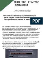 Initiation Aux Plantes Sauvages