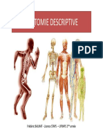 poly_ANATOMIE_DESCRIPTIVE