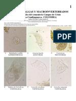 1125_colombia_protozoa_algae_and_macroinvertebrates_of_the_campos_de_cristo_cemetery.pdf
