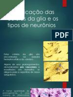 Cópia de Identificação das células da glia e os tipos