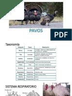 Produccion de Pavos.pptx