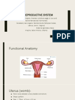 Female reproductive system functional anatomy and ovary