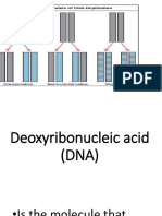Deoxyribonucleic-acid-DNA.pptx