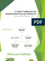 STRUKTUR TUBUH TUMBUHAN share.pptx
