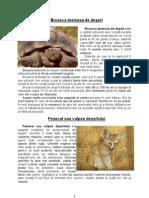 Animale Care Traiesc in Desert