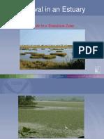 survival-in-an-estuary-presentation