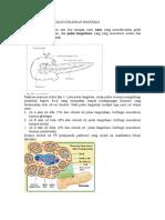 109314380-Anatomi-Dan-Histologi-Kelenjar-Pankreas(1).doc