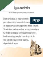 53-56-El-gato-domestico