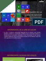 EXPOSICION CAÑA DE AZUCAR