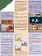 Ganoderma Lucidum Flyer