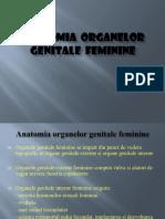 Organele Genitale-Feminine.ppt